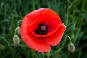 The importance of personal memory on Remembrance Day